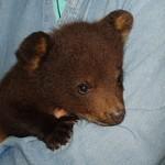 Wildlife Photo Blog